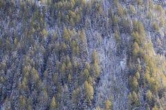 Sikt av skogen Fotografering för Bildbyråer