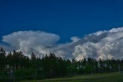 Sikt av skogen under sommardag på bakgrund av stora vita moln skiestrees för blå green Arkivbilder