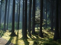 Sikt av skoglandskapet Arkivbilder