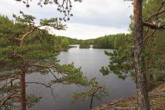 Sikt av skogsjön Arkivbilder