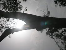 sikt av solen Arkivbild