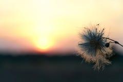 Sikt av solnedgången och blomman Arkivbilder