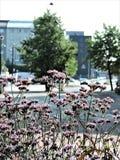 Sikt av sommargatan i Helsingfors med purpurfärgade blommor och gröna träd! royaltyfri bild