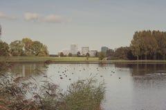 Sikt av staden från en sjö med änder Arkivfoton