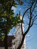 Sikt av stadshuset i gammal stad Kaunas Litauen Royaltyfri Bild