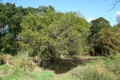 Sikt av Sugar River In Wisconsin royaltyfria foton