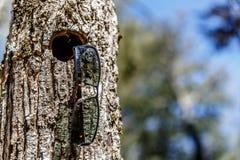 Sikt av svarta exponeringsglas som hänger i ett hål i stammen av ett träd royaltyfri fotografi