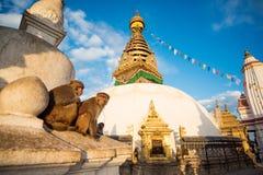 Sikt av Swayambhunath Katmandu, Nepal Arkivfoton
