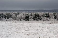 Sikt av träd i snö arkivfoton