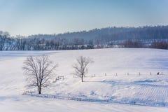 Sikt av träd och staket i etttäckt lantgårdfält i lantligt Y arkivbilder