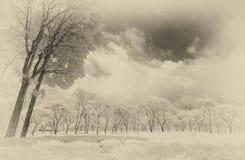 Sikt av träd och tefältet Arkivfoto