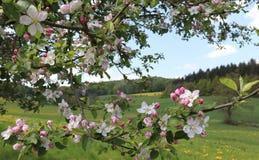 Sikt av träden och kullarna till och med vårblommorna som blommar på trädet royaltyfri foto