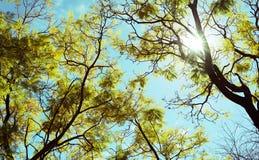 Sikt av trädfilialen arkivfoton