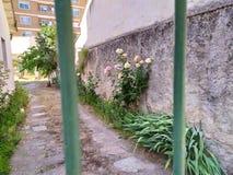 Sikt av trädgården till och med staketet arkivfoton