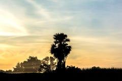 Sikt av trädkonturer i morgonen arkivfoton