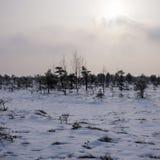 Sikt av träsket i den Kemeri nationalparken i Lettland som täckas med insnöad vinter arkivfoto