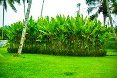 Sikt av tropiska blommor och mini- träd royaltyfri fotografi