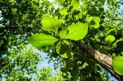 Sikt av tropiskt Royaltyfri Foto