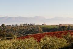Sikt av Tuscany kullar arkivfoto