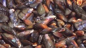 Sikt av tvättade rengjorda polerade musslor i durkslag Restaurangkök Förbereda sig för att laga mat stock video