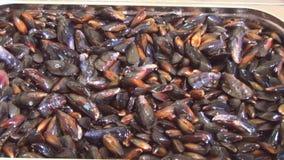 Sikt av tvättade rengjorda polerade musslor i durkslag Restaurangkök vask Förbereda sig för att laga mat lager videofilmer