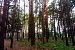 Sikt av vägen i skogen i ottan arkivfoton