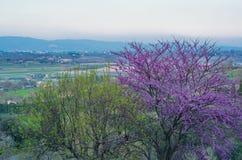 Sikt av Val di Chiana Arkivbild