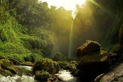 Sikt av vattenfallet och det grönaktiga skoglandskapet Royaltyfria Bilder