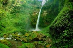 Sikt av vattenfallet och det grönaktiga skoglandskapet Arkivfoto