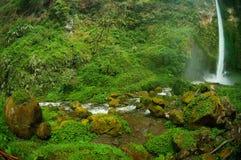 Sikt av vattenfallet och det grönaktiga skoglandskapet Arkivfoton