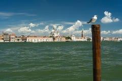 Sikt av Venedig med en seagull i förgrunden Fotografering för Bildbyråer