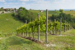 Sikt av vingårdar från Valdobbiadene, Italien under våren Arkivfoto