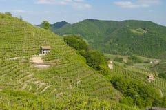 Sikt av vingårdar från Valdobbiadene, Italien under våren Fotografering för Bildbyråer