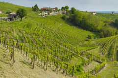 Sikt av vingårdar från Valdobbiadene, Italien under våren Arkivbild
