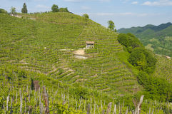 Sikt av vingårdar från Valdobbiadene, Italien under våren Arkivfoton