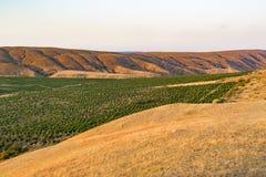 Sikt av vingårdarna i kullarna Arkivfoto