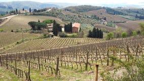 Sikt av vingården på Toscanaen stock video
