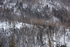 Sikt av vinterskogen i de höga Tatras bergen Royaltyfri Fotografi