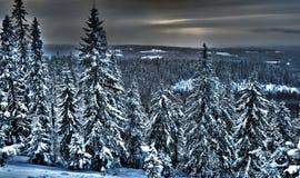 Sikt av vinterskogen i nordliga Finland, hdrfoto Arkivfoton