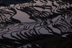 Sikt av Yuan Yang Rice Arkivbilder