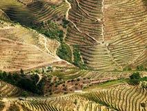 Sikt för abstrakt begrepp för wineyards för Douro dalflod flyg- Royaltyfri Bild