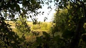 Sikt för bakgrund för Apple träd till fälten av Podillya, Khmelnytskyi, Ukraina arkivfilmer