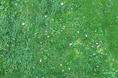 Sikt för bakgrund för grönt gräs för natur bästa, ny vårgräsplan Royaltyfria Bilder