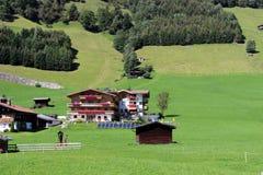 sikt för berg för alpsskogliggande Arkivbild