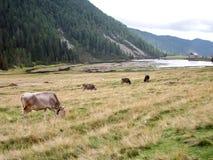 sikt för berg för alpsskogliggande Arkivbilder