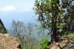 Sikt för berg för landskapskog djup Fotografering för Bildbyråer