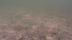 Sikt för djupt hav lager videofilmer