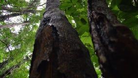 Sikt för fågelöga av filialer av trädet arkivfilmer