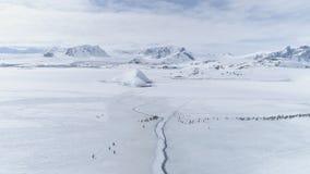 Sikt för flyttning för Gentoo pingvingrupp arktisk flyg- arkivfilmer