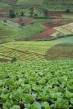 sikt för grönsallatfältberg Royaltyfri Fotografi